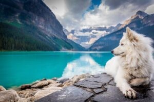 dog and a lake with mountains