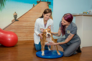 Jupiter Veterinary Center Dr. Rodrigues, Staff Member, and Patient