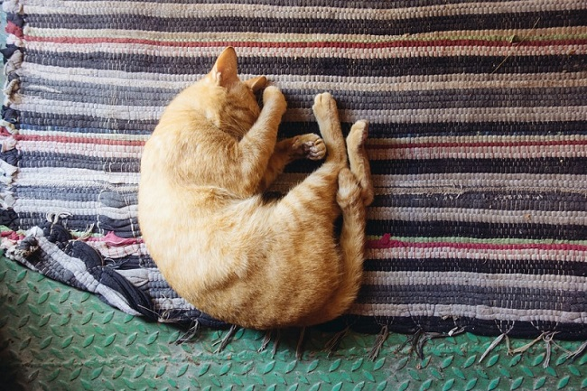 A perfect pose for memorialization to remember your cat's comfort.